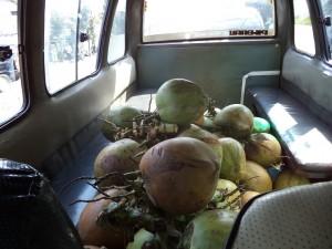 ミニバスの椰子